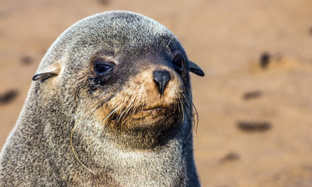 Cape Cross Seal Reserve: A smelly encounter