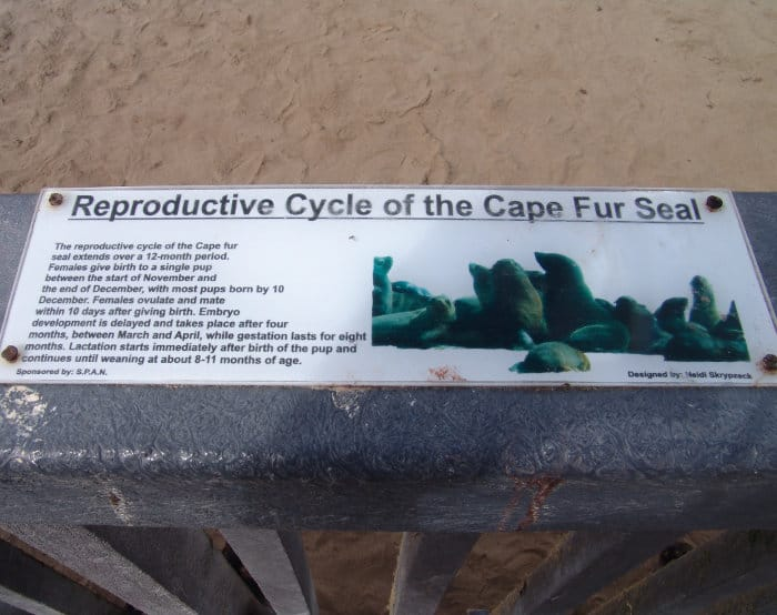 Reproductive cycle of the Cape fur seal at Cape Cross