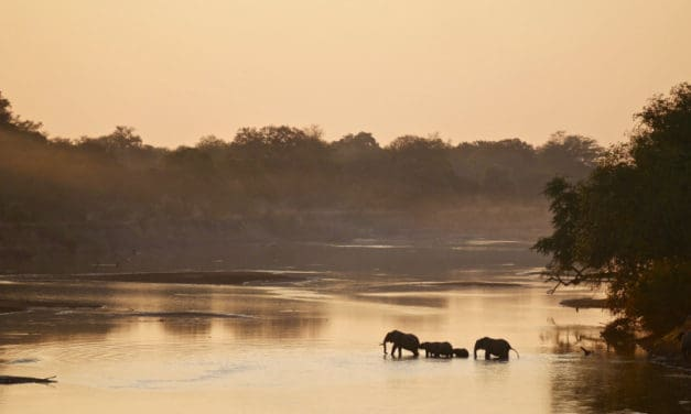 South Luangwa National Park, Zambia: complete safari guide