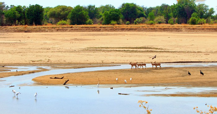Scenic view of the dry Luangwa River with impala and a variety of birds