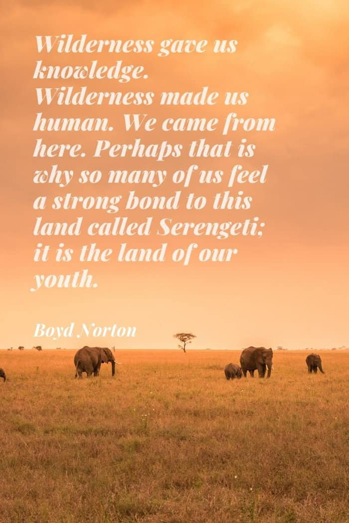 Boyd Norton quote about the Serengeti - the land of our youth