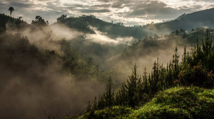Scenic view of the Bwindi Impenetrable Forest National Park in Uganda