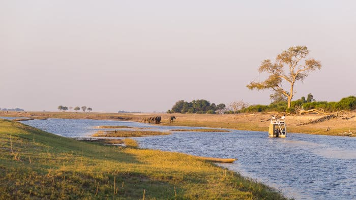 Boat cruise safari on the Chobe river, with elephants having a drink