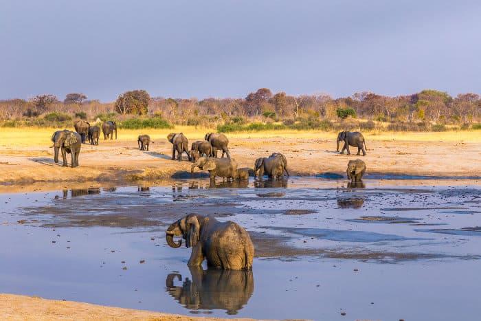 Herd of elephants at a waterhole, Hwange, Zimbabwe