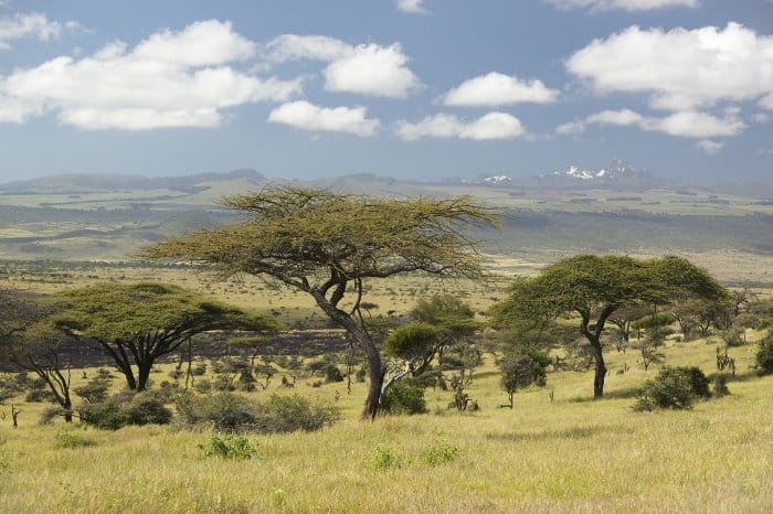 Gorgeous view of the Lewa Wildlife Conservancy, with Mount Kenya in the background