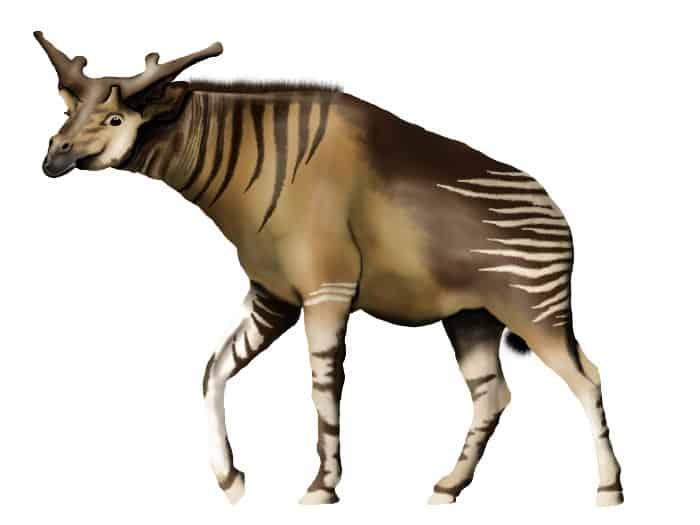 Sivatherium, an extinct genus of giraffid that roamed the Earth until around 10,000 years ago