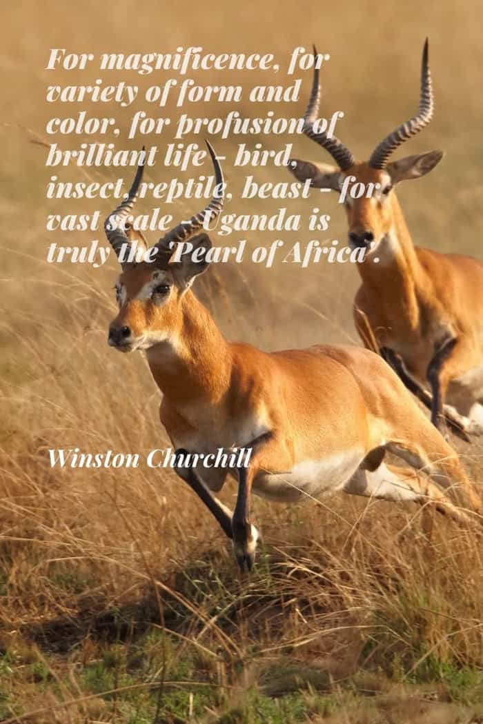 Winston Churchill quote about Uganda - The Pearl of Africa