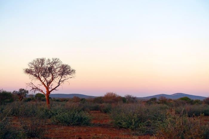 Typical Madikwe bushveld at sunrise, South Africa
