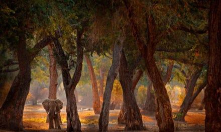 Mana Pools National Park – The ultimate safari guide