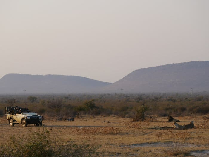 Observing lions on a game drive in Madikwe Game Reserve, South Africa