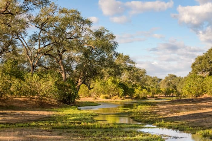 Typical vegetation along the river bed in Mana Pools, Zimbabwe