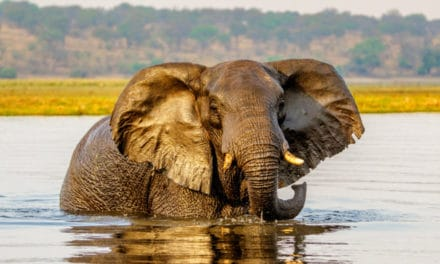 Best elephant safaris in Africa: top countries & parks for ellie-spotting