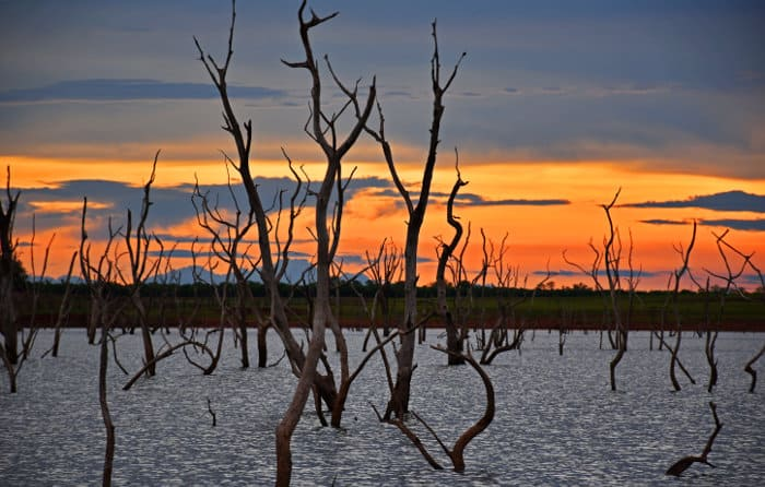 Dead trees in the water with stunning sunset in the background, Lake Kariba, Zimbabwe