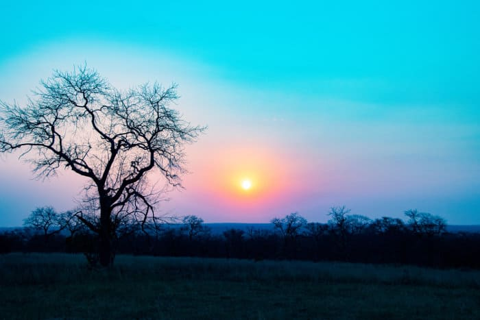 Typical bush scenery at sunset, Mala Mala Game Reserve, South Africa