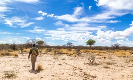 African safari tips: how much should you be tipping on a safari?