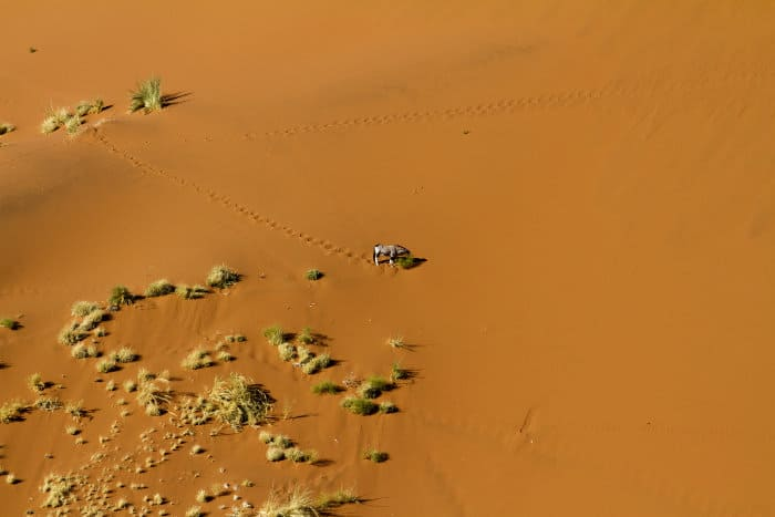Lone gemsbok pictured from above in Sossusvlei, Namibia