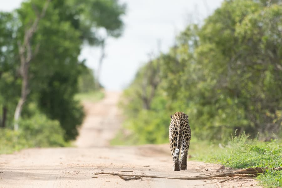 Mala Mala Game Reserve: South Africa's exclusive safari destination