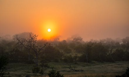 Sabi Sands Game Reserve – An honest safari guide