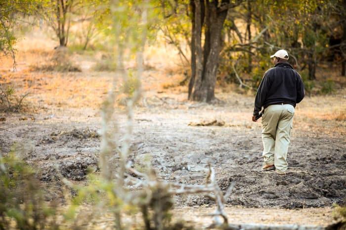 Safari guide tracking animals in Sabi Sabi