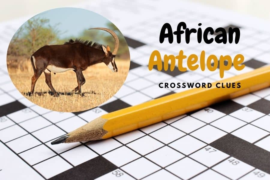African antelope crossword clues – Breakdown by letters & other facts