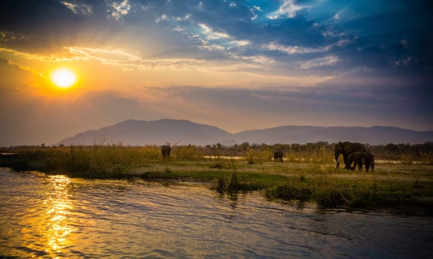 Lower Zambezi National Park: safaris and camps beyond special