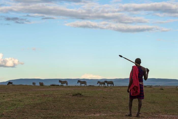 Maasai warrior with herd of zebra on the horizon