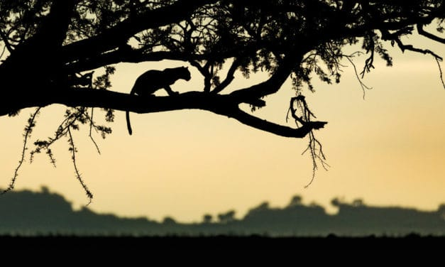 The ultimate safari guide for Tanzania – Everything you need to know