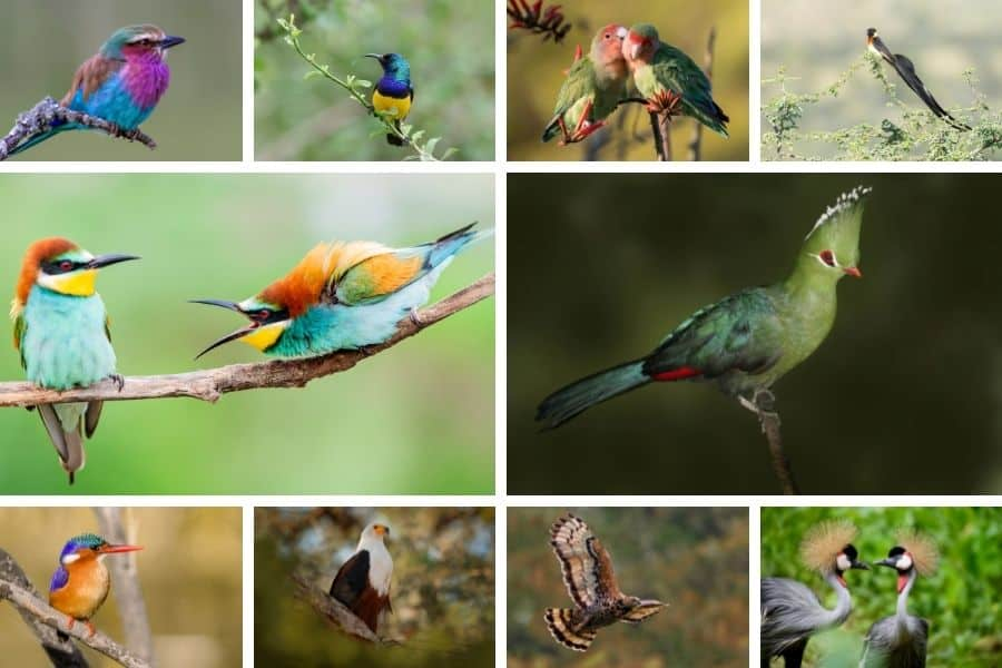 Top 10 most beautiful birds in Africa