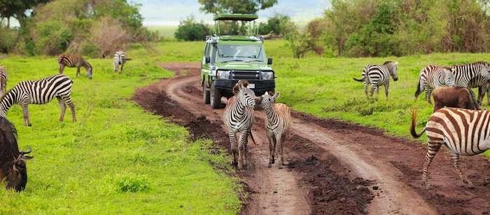 Zebra spotting on a game drive in Tanzania
