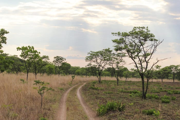 Road track in Kafue National Park, Zambia