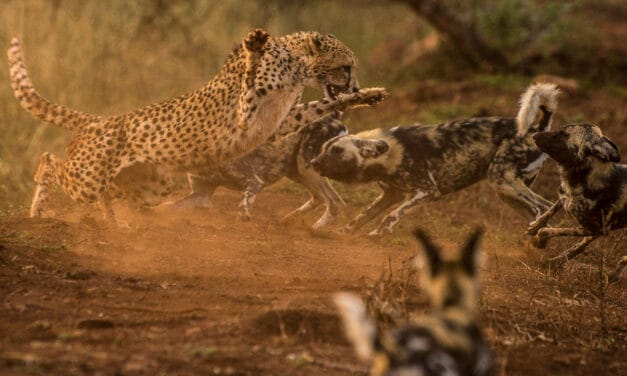 Apex predators: 5 animals at the top of the food chain