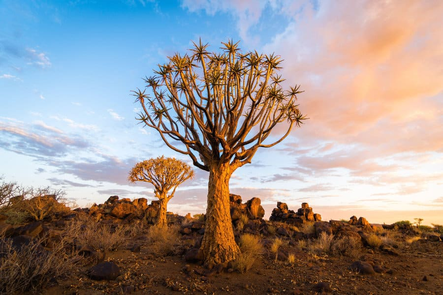 Top 10 Things to Do in Namibia in 2021