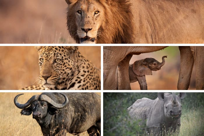 The Big Five safari animals